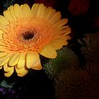 Yellow by FBSPhotoClub