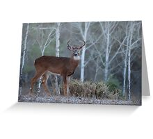 Buck In The Mist Greeting Card