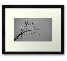In the lonely sky Framed Print