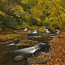 Autumn On Dingmans Creek by Stephen Vecchiotti
