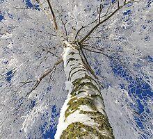 Snow World by Aviana