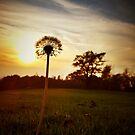 Sometimes the Sun Spangles by Richard Pitman