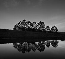 Traveston Dam Reflections by Kate Wall