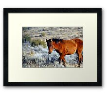 Wild Horses in Nevada #2 Framed Print