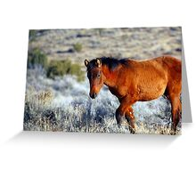 Wild Horses in Nevada #2 Greeting Card