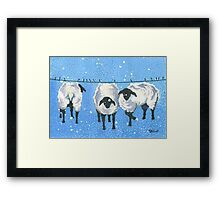 100% WOOL ( wash cold, line dry only) Framed Print