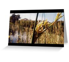 Wetland Reeds Greeting Card