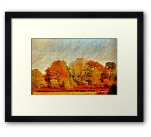 A Wiltshire wood, Autumn 2011 Framed Print