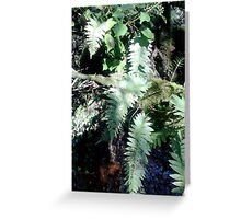 woodland ferns Greeting Card