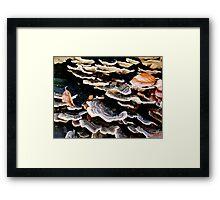 Sea Shell Fungi Framed Print