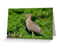 Spotted Thick-knee (Gewone Dikkop) Greeting Card