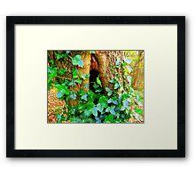 Holy Tree  Framed Print