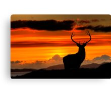 Monarch of the Glen at sunset Canvas Print