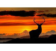 Monarch of the Glen at sunset Photographic Print