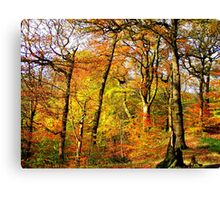 Colourful Countryside Canvas Print