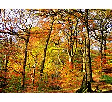 Colourful Countryside Photographic Print