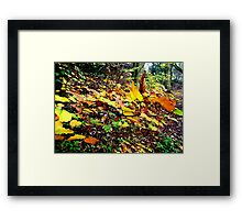 Colourful Leaves Framed Print