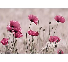 Rose Mohn Photographic Print