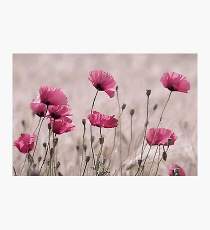 Rose Mohn Photographic Print