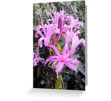 summer garden flower Greeting Card