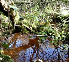 woodland scene by Johnathan Bellamy