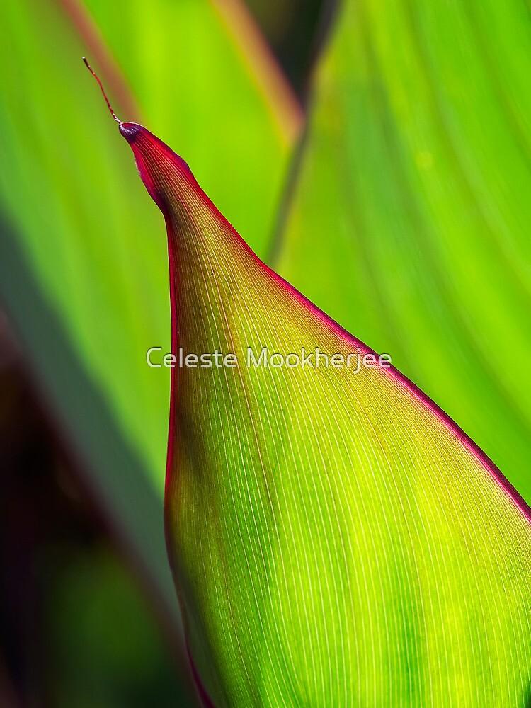 Canna leaf study by Celeste Mookherjee