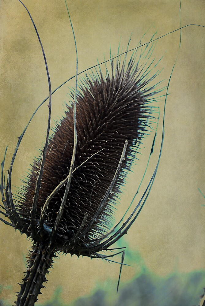 Teasel with added texture by Kate Fortune