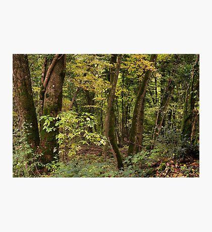 A quiet woodland in autumn Photographic Print