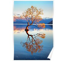 That Wanaka Tree Poster