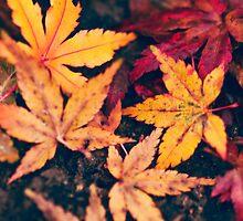 Day 128 - 15th November 2011 by petegrev