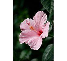 Pinky-1 Photographic Print