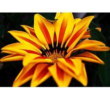 Striped flower Photographic Print