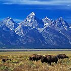 Where the Buffalo Roam by Rick Louie