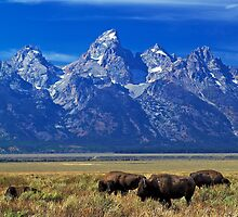 Where the Buffalo Roam by Rick Louie