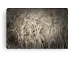 Some kind of plant Canvas Print
