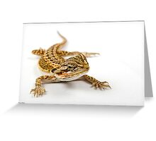 Bearded Dragon Greeting Card