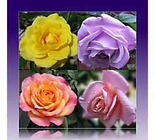Four Roses Collage Photographic Print