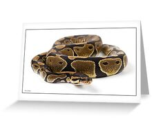 Royal python Greeting Card