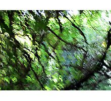 Emerald Garden Photographic Print