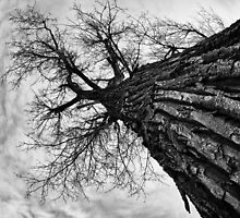 Dark Tree by Robert Smith