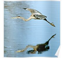 Soaring over Exeter River Poster