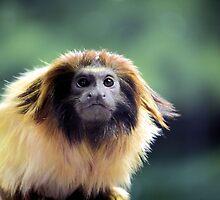 What U Lookin' At! by Carrie Bonham