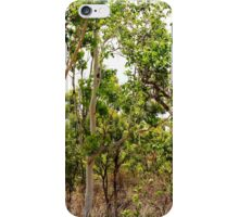 Eucalyptus Trees with Dry Grass iPhone Case/Skin
