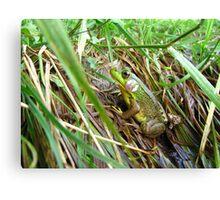 Green Frog Macro Canvas Print