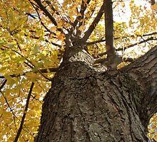 The tree by DreamCatcher/ Kyrah