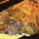 autumn  colors by ANNABEL   S. ALENTON