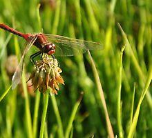 DRAGON FLY by worretphoto