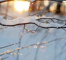 Winter flares by photographyjen