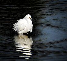 Reflections of an Egret  by Saija  Lehtonen
