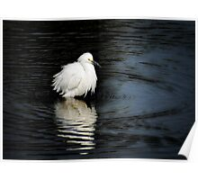 Reflections of an Egret  Poster